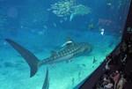 ジンベイザメ 沖縄 美ら海水族館