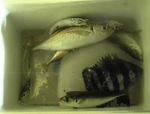 能生堤防(6月)の釣果